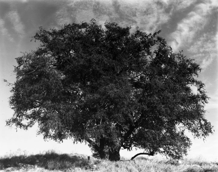 עץ, טבע דומם חולף
