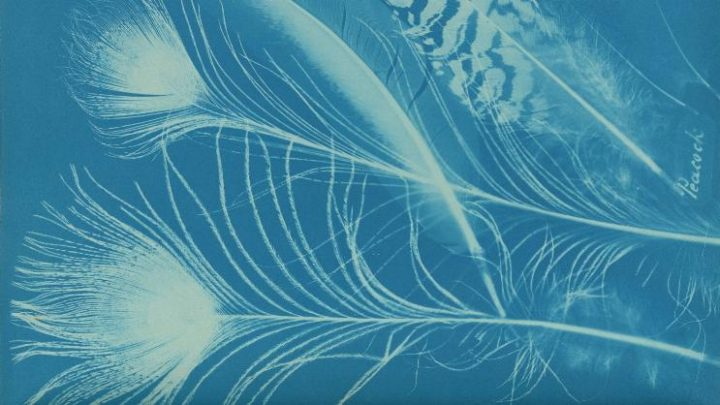 Anna Atkins and Anne Dixon, Peacock , Private collection