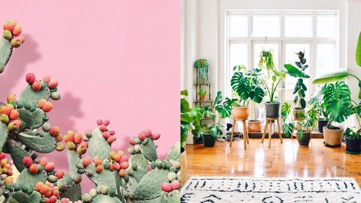 רוצים פיד ירוק יותר? 8 חשבונות אינסטגרם שמצאו אהבה בצמחים