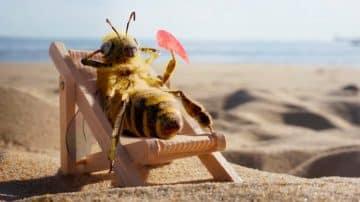 זאת B: הפרזנטורית המגניבה מקמפיין גיוס ההמונים למען הדבורים