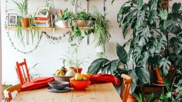מטהרים, משמחים ומעשירים: צמחים בבית, אם לא עכשיו אז מתי?