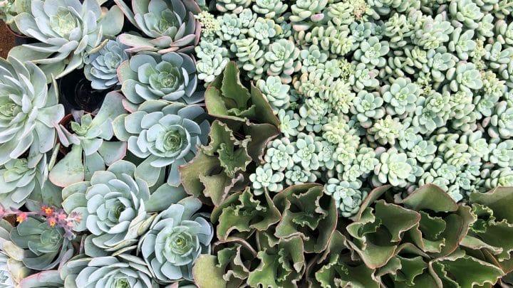 קחו אותי!! צעק כל צמח בכל משתלה בעולם. בואו לגלות איך לבחור נכון