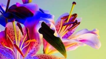 מדברת בפרחים: שומרי המסך שנוצרו מסצנות פסיכודליות