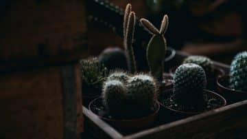 חשבתם שאתם מאסטרים בגידול צמחים? כל הדרכים להציל אותם מהחורף