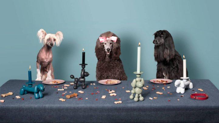 כלבים יפים, פמוטים, שולחן חג